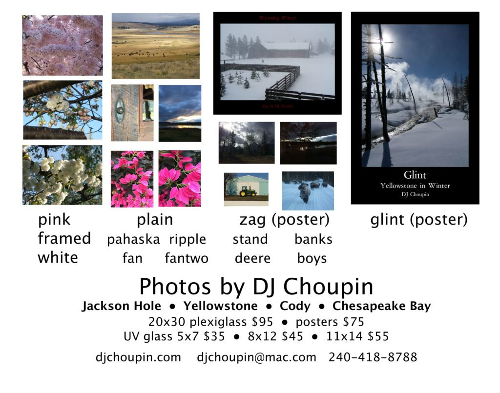 Thumbnail photos of DJ Choupin's photos are shown with their titles and prices